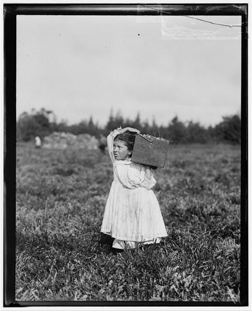 "Eight-year-old, Jennie Camillo, lives in West Maniyunk, Pa. (near Philadelphia). For this summer she has picked cranberries. This summer is at Theodore Budd's Bog at Turkeytown, near Pemberton, N.J. This is the fourth week of school in Philadelphia and these people will stay here two weeks more. Her look of distress was caused by her father's impatience [?] over her stopping in her tramp to he ""bushelman"" at our photographer's request. Witness, E.F. Brown, Sept. 27, 1910.  Location: Pemberton, New Jersey"