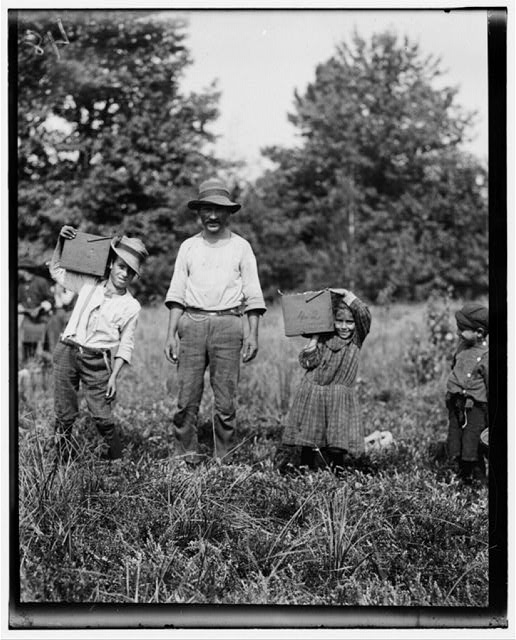 "Lucy ---- carrying peck of cranberries (weighing about 15 pounds) long distance to ""bushel man."" Did not know age. Forsythe's Bog, Turkeytown, near Pemberton, N.J. Sept. 29, 1910. Witness E. F. Brown,.  Location: Pemberton, New Jersey"