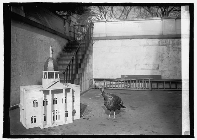 White House turkey, 1920, 11/20/20
