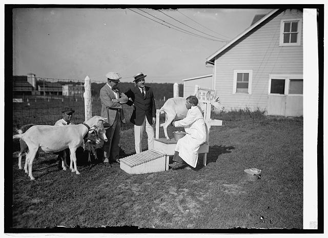 Sec. Wallace & Dr. W. Thurnheer of Swiss legation at Beltsville, [Md.], farm with goats, [8/18/24]