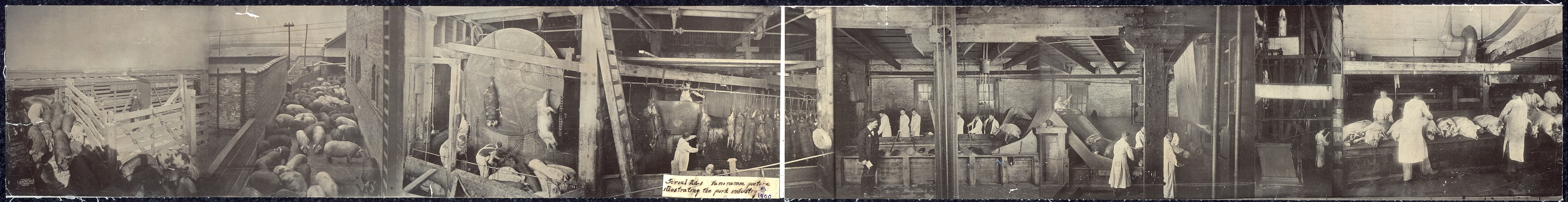 Panoramic picture illustrating the pork industry