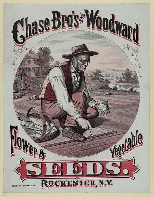 Chase Bro's and Woodward. Flower & vegetable seeds