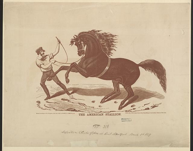 The American stallion