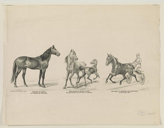 Aristotle, by Aristos: as a producer and stock horse Marie Frank, by Charley Wilkes: with her suckling colt, Red Virgil, by Aristotle Red Virgil, by Aristotle: dam, Marie Frank: in his yearling form