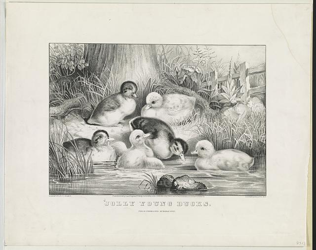 Jolly young ducks