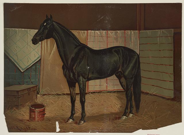 [Black Cloud, a horse in stable]