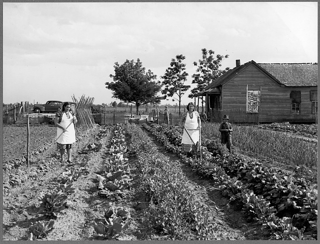 Farm workers in Southeastern Missouri augumenting their sparse income by growing their own food in a spring garden. (Labor Rehabilitation Program)
