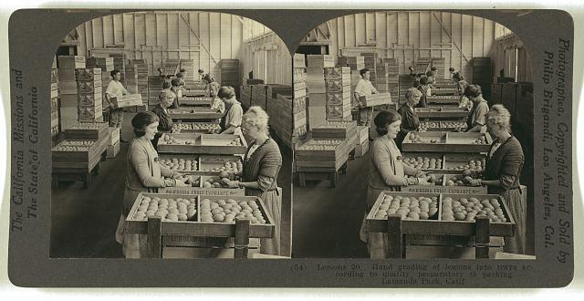 Hand grading of lemons into trays according to quality, preparatory to packing. Lamanda Park, Calif.