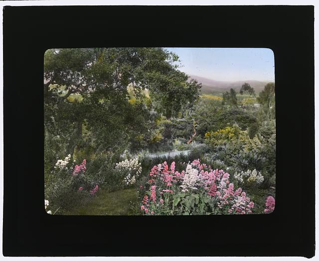 "[""El Cerritto,"" Edward Larned Ryerson Jr. house, Hot Springs Road, Santa Barbara, California. Valerian along pathway]"