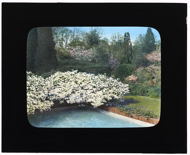 "[""Old Acres,"" Robert Low Bacon house, Old Westbury, New York. Azaleas by pool]"