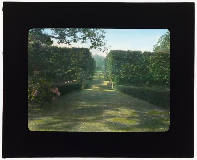 "[""Thornedale,"" Oakleigh Thorne house, Millbrook, New York. Sugar maple hedge along alley to rose garden]"