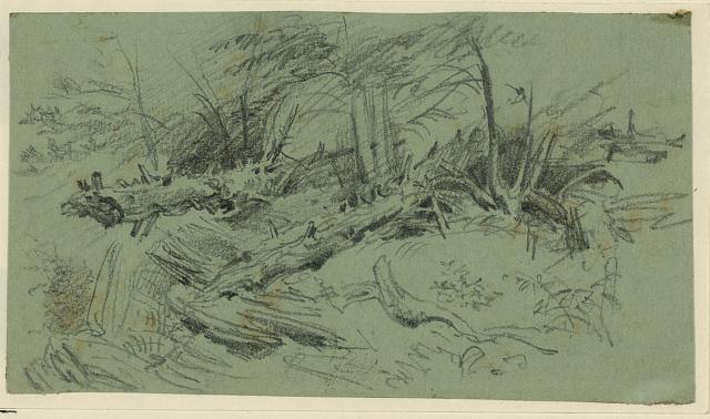 [Landscape with fallen trees and rocks]