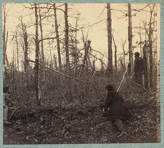 Trees shattered by artillery fire on south side of Plank Road near where Gen. Stonewall Jackson was shot