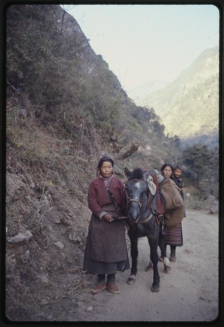 [Woman leading horse on mountain road with another woman and child, Lachung, Sikkim]