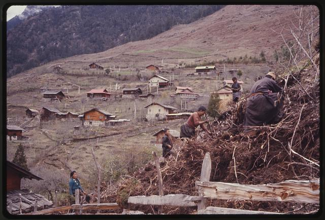 [Members of the Jorbu family, digging in pile, houses of Lachung in background, Sikkim]