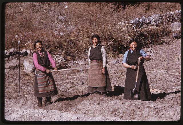 [Three women standing, with farming implements in field, Lachung, Sikkim]