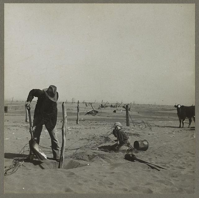 Dust bowl farmer raising fence to keep it from being buried under drifting sand. Cimarron County, Oklahoma