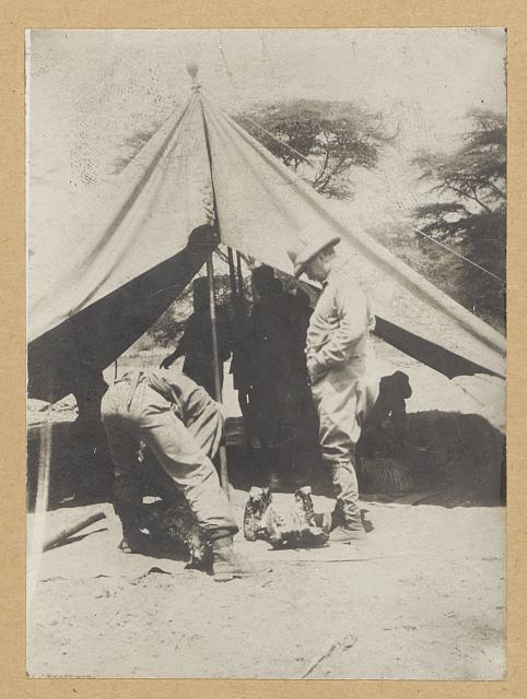 Cuninghame looking for the bullet in the skull of a hippo shot by Roosevelt