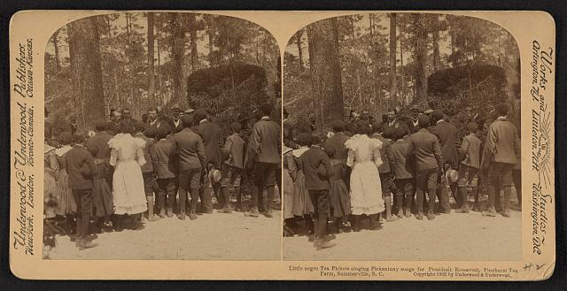 Little Negro tea pickers singing pickaninny songs for President Roosevelt, Pinehurst Tea Farm, Summerville, S.C.