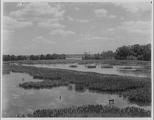 Swamp. View of water and water plants