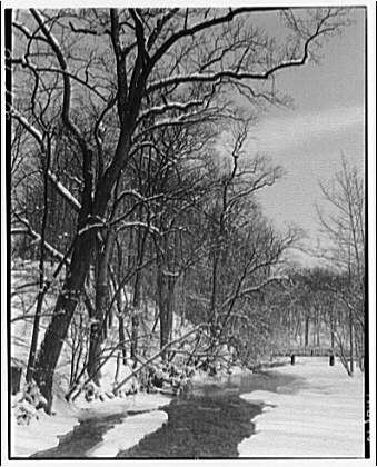 Winter scenes. Snow-covered trees along creek